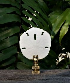 Sand Dollar Finial, Off White Finial,  Medium Large, Table Floor Lamp, Custom Handmade, Beach Home Decor, Vero Lampshades, Natural Organic by VeroLampshades on Etsy