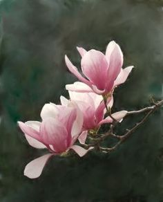 Lawn and Garden Decor - japanese magnolia tree
