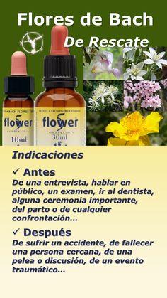 16 Mejores Imagenes De Flores De Bach Essential Oils How To Make