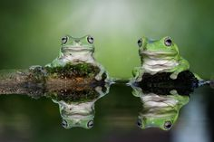 miror frog - null