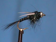 Beginner Fly Tying a Zebra Prince with Jim Misiura Nymph Fly Patterns, Fly Tying Patterns, Best Fishing Reels, Fishing Stuff, Fishing Rods, Freshwater Aquarium Shrimp, Fly Fishing Colorado, Fly Tying Desk, Aquatic Insects