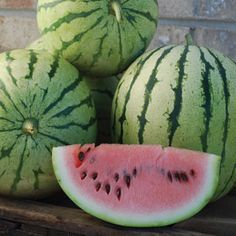 CHRIS CROSS: This variety is the result of a cross made between Hawksbury and Dixie Queen made by Chris Christensen around 1950 in Montrose, Iowa.  Thought to be extinct.  Good yields of 15-20 pound fruits.  Sweet, dark pink flesh.  Well adapted to the Midwest.  85-90 days. CERTIFIED ORGANIC