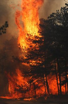 The awesome, horrible power of wild fire... Rebirth always follows the devastation