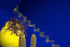 Majorelle Gardens, Marrakech, Morocco ~ Colin White.