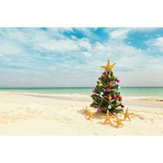 "TrekDecor ""Carribean Christmas"" Photographic Print & Reviews | Wayfair"