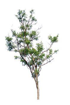tree PNG by blur-stock on DeviantArt Landscape Sketch, Landscape Elements, Landscape Materials, Landscape Design, Architecture Graphics, Landscape Architecture, Photomontage, Tree Psd, Tree Photoshop