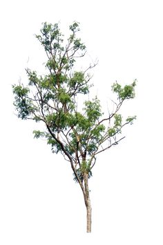 tree PNG by blur-stock.deviantart.com on @deviantART