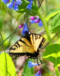 Butterfly   Photography by Sandra Walters