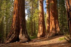 Hike in the company of giants in Sequoia and Kings Canyon National Parks.