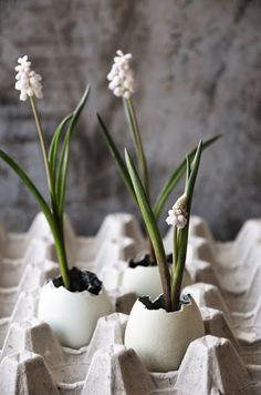 My big Easter DIY egg edit: pretty spring flowers in cracked egg shells