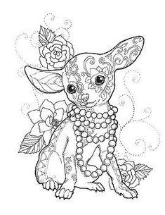 Chihuahua elegante por Cindy Elsharouni