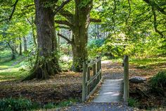 """pagewoman: """" Loweswater, Lake District, Cumbria, England by Andrew Locking """" Cumbria, Lake District, Paths, England, Country Roads, Garden, Garten, Pathways, Lawn And Garden"""