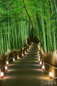 Backyard Landscaping Discover 15 Truly Astounding Places To Visit In Japan - Travel Den Arashiyama Bamboo Forest Japan - 15 Truly Astounding Places To Visit In Japan Beautiful Places In Japan, Beautiful Places To Visit, Cool Places To Visit, Amazing Places, Beautiful Nature Wallpaper, Beautiful Landscapes, Beautiful Gardens, Japan Landscape, Landscape Design