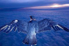Потрясающие фотографии редких птиц! » Женский Мир