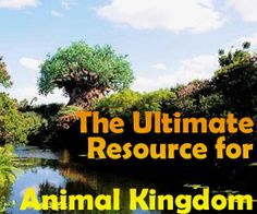 A guide to all Animal Kingdom attractions from WDWPrepSchool.comA guide to all Animal Kingdom attractions - Includes tips & ride videos to help you plan your visit