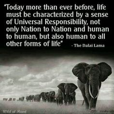 universal responsibility - humans must respect all life.