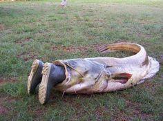 Now that's a BIG fish, lol 😜 Funny Fishing Pictures, Funny Pictures, Funny Girl Quotes, Funny Quotes For Teens, Fishing Life, Gone Fishing, Fishing Stuff, Bass Fishing, Catfish Fishing
