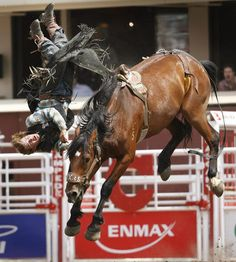 Calgary Stampede, Canada's oldest rodeo.  Uuuuh, there goes my back again-