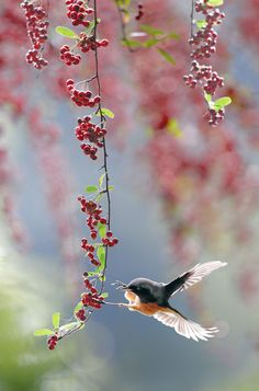 A spring day...and humming bird of song.