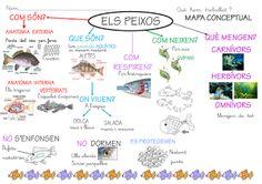 projecte la classe dels  peixos Carmen Ferrer