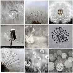 Dandelion dreams Watch the seeds fly, make a wish Whisper your desires Shots from the archives raindrops in dandelion clock ☷ Dandelion clock IV (version) ~ Wishes Dandelion ☰ Dandelions/spring rain Shadow garden Dandelion Clock, Dandelion Wish, Illustration Botanique, Photo Mosaic, Foto Art, Jolie Photo, Seed Pods, Make A Wish, Graphic