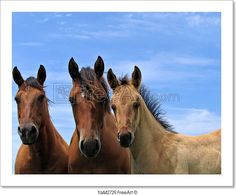 """Three quarter horses standing attentively""  - Art Print from FreeArt.com"