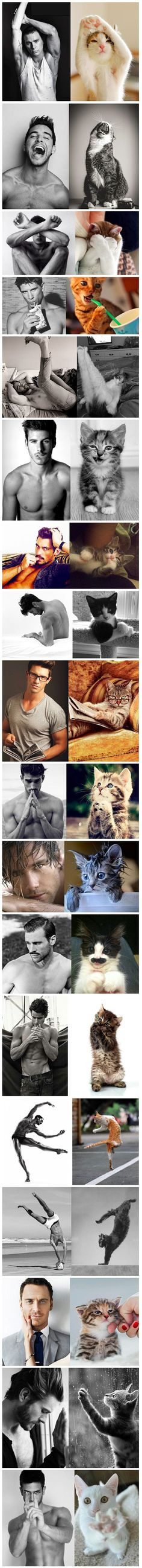 Des Hommes et Des Chatons (Men and Cats) is a single-topic blog that pairs similar photos of attractive men with pictures of adorable cats. The brilliant match-ups feature a variety of heartthrobs (including celebrities like Channing Tatum and Michael Fassbender) posing seductively alongside shots of cuddly felines striking a pose that makes the viewer question which subject theyre more interested in looking at.
