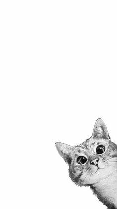 Wallpaper Gatos, Iphone Wallpaper Cat, Tier Wallpaper, Cute Cat Wallpaper, Iphone Background Wallpaper, Animal Wallpaper, Cat Background, Cat Aesthetic, Cute Cats And Kittens