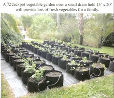 Fort Lauderdale Vegtables, founded by my brother Michael Madfis, a decentralized farming and community gardens business.  www.fortlauderdalevegtables.com