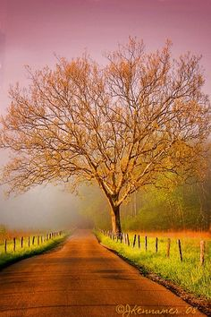 Follow Your Path| Serafini Amelia| Travel America| Cade's Cove Tennessee-Morning