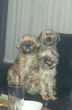 Ozzy, Gizzy and Lily