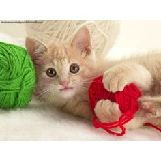 Kitten playing with yarn wallpapers and backgrounds for myspace and... ❤ liked on Polyvore featuring cats