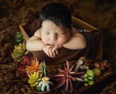 Newborn photo shoot with succulents