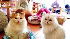 Gérant d'un bar à chats