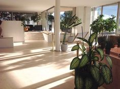 Loving this #Entrance made with #PVCFree #FlooverFlooring.  Visit our #PetratosShowroom or contact us @CarpetsRugsFlooring to discuss the ideal #FlooringSolutions for your new project or #Home • Ιδανικό #Πάτωμα για την διαμόρφωση #εισόδου χωρίς PVC από την εταιρεία #Floover.  Επισκεφτείτε την έκθεση #PetratosFlooring στην #Κηφισιά ή επικοινωνήστε μαζί μας για να βρούμε το ιδανικό #πατωμα για τις αναγκές του δικού σας χώρου. Flooring, Interior, Plants, Indoor, Wood Flooring, Interiors, Plant, Floor, Planets