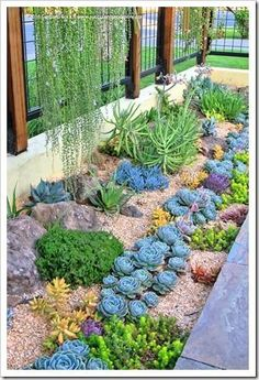 Succulents and More frontyard landscaping outdoor Garden, Succulent landscaping, Succulents Banana Trees Home Design Ideas, Pictures, Remo. Succulent Landscaping, Succulent Gardening, Landscaping With Rocks, Front Yard Landscaping, Planting Succulents, Landscaping Ideas, Organic Gardening, Desert Gardening, Succulent Garden Ideas