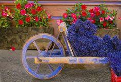 Lavendar display, Village of Sault, Provence, France