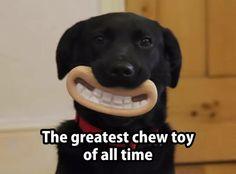 Greatest chew toy