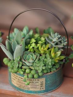 60 Charming Succulent Indoor Garden Ideas 2019 Page 6 of 64 Garden art Succulent Garden Diy Indoor, Succulent Landscaping, Succulent Gardening, Container Gardening, Indoor Gardening, Succulents In Containers, Cacti And Succulents, Planting Succulents, Planting Flowers