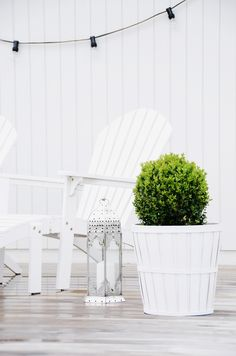 White and green setting, lovely contrast really makes the bush jump out | adamchristopherdesign.co.uk