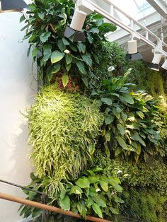 Anthropologie Green Wall | Top Section of green wall, which … | Flickr