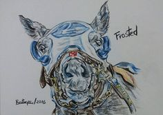 Frosted (color pencil on paper) #horseracing #horse #horseart #horseartist #arte #art #pencildrawing #colorpencil #drawing #thoroughbred