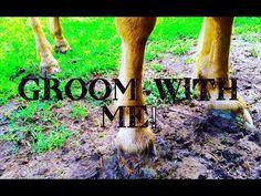 Groom With Me! - YouTube Groom, Channel, Youtube, Grooms, Youtubers, Youtube Movies
