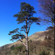 I am always in awe of the elegance of this tree on Buttermere shore