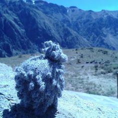 Misti, la oveja de Arequipa