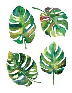 Split Leaf Philodendron watercolor on white background vector,illustration Leaf Drawing, Plant Drawing, Painting & Drawing, Illustration Botanique, Leaf Illustration, Art Illustrations, Watercolor Flowers, Watercolor Paintings, Watercolour