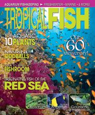 The September 2012 Issue marked the 60th Anniversary of TFH, with a look back at our storied history, plus great articles on the top 10 aquatic plants, how to build a fishroom, marine oddballs, and much more!