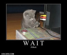 Funny pictures of cats and kittens. Funny pictures of cats and kittens. Funny pictures of cats and kittens photo. Funny Cats, Funny Animals, Cute Animals, Baby Animals, Cute Kittens, Cats And Kittens, Funny Animal Pictures, Funny Images, Animal Pics