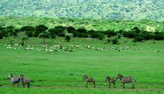 Tanzania Tour Operator, Tanzania, Tours, Mountains, Nature, Travel, Naturaleza, Viajes, Destinations