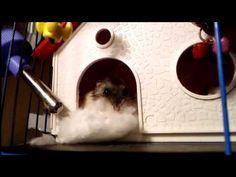 ОБЗОР домашнего животного/МОЙ ХОМЯК/an overview of pet/my hamster